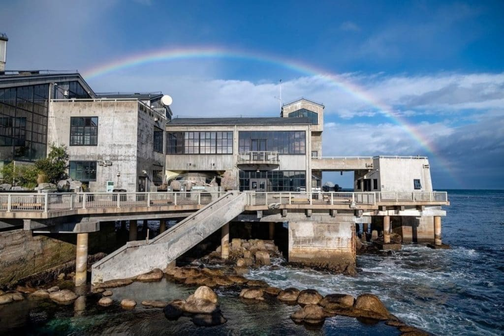 Ocean Lovers, Rejoice! You Can Finally Get Tickets To The Monterey Bay Aquarium Starting Tomorrow
