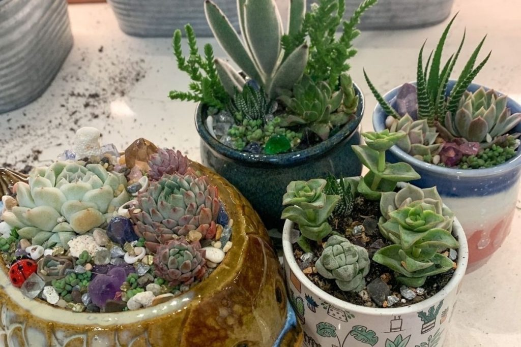 This SF Plant Store Lets you Create Your Own Beautiful Arrangements