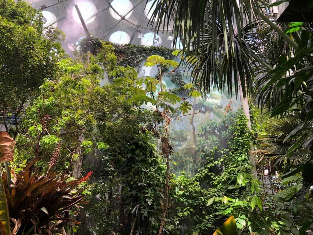 California Academy Of Sciences To Open On March 17