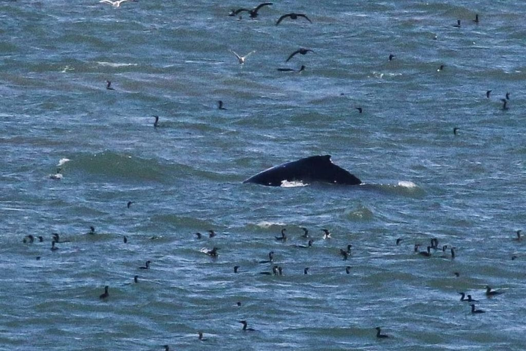 First 2021 Humpback Whale Spotted In San Francisco Bay
