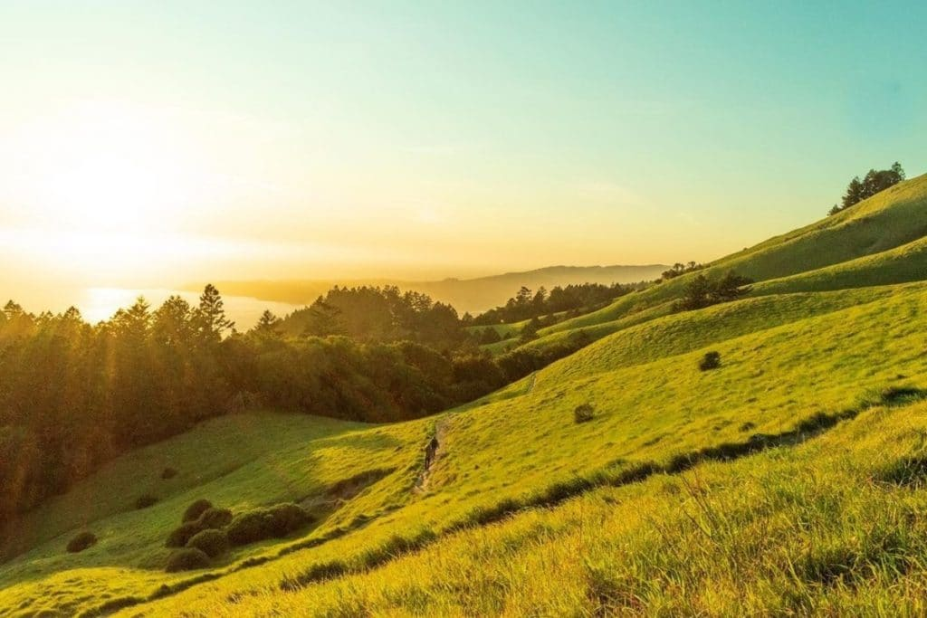 10 Stunning Captures Of Mount Tamalpais State Park That Will Make You Want To Run For The Hills