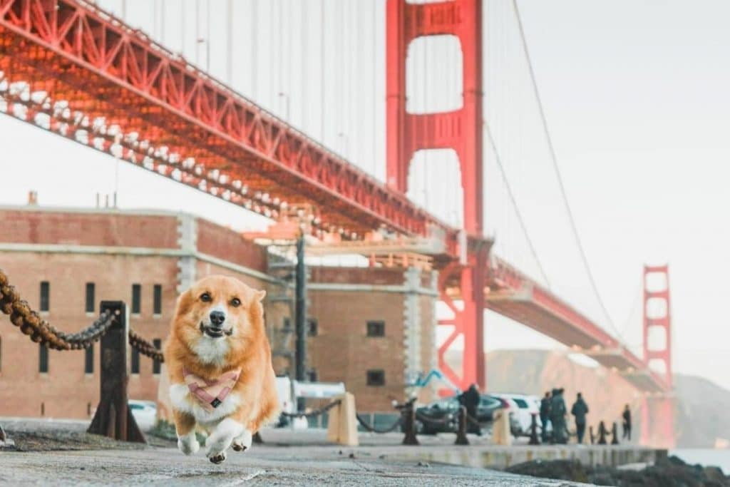 10 Adorable San Francisco Dogs With A Better Instagram Feed Than You