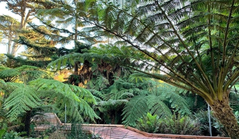 6 Wonderful SF Museums And Gardens Offering Free Admission Days