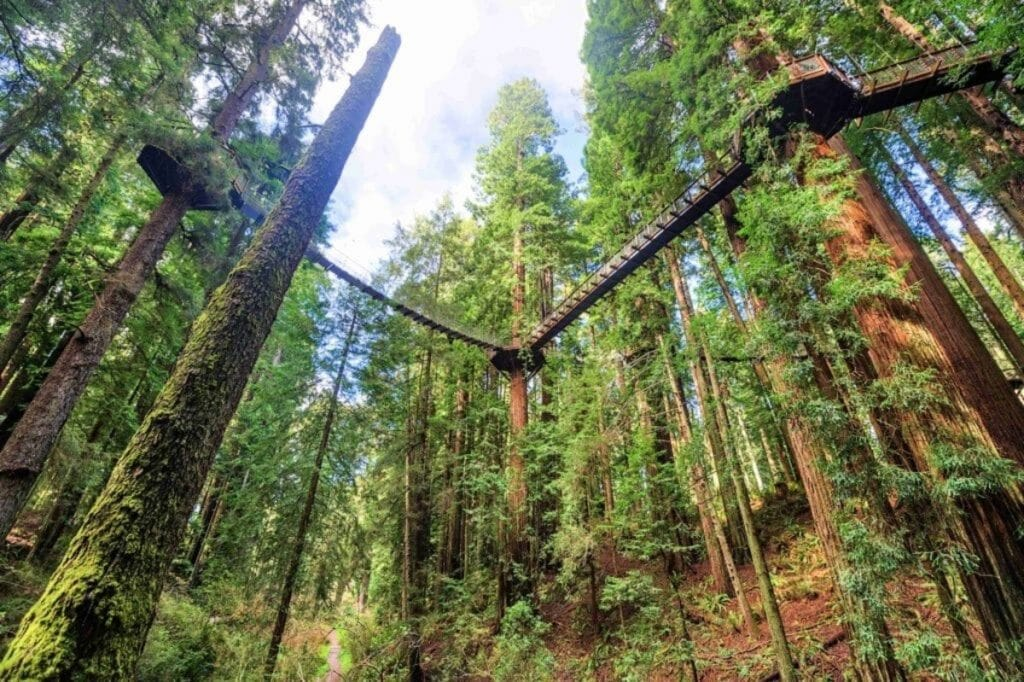This Incredible New Skywalk In Eureka Puts You On The Same Level As The Redwoods