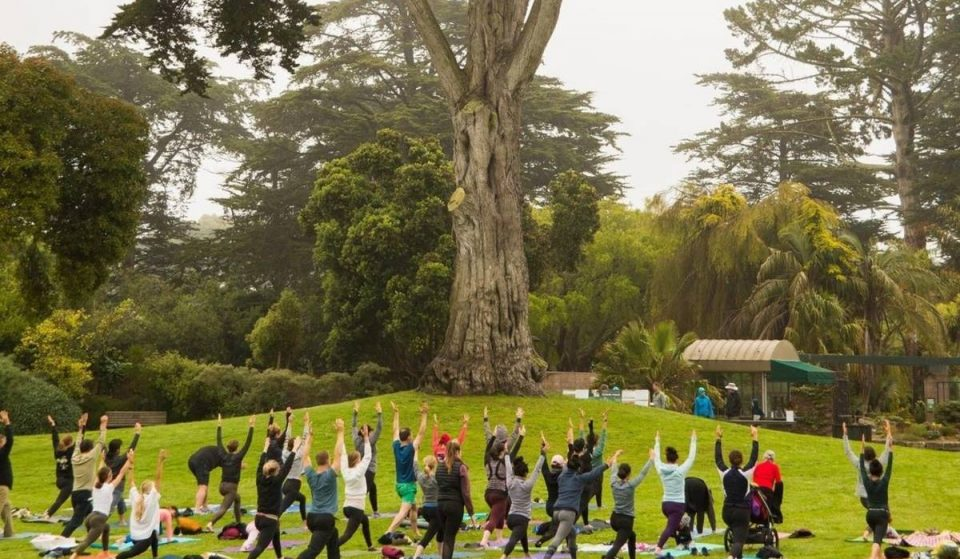 This Peaceful Outdoor Yoga Series Is Back On At SF Botanical Garden