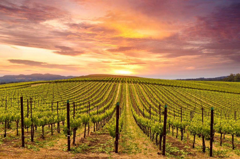 Napa Valley Named One Of 'The World's 100 Greatest Places Of 2021' By TIME