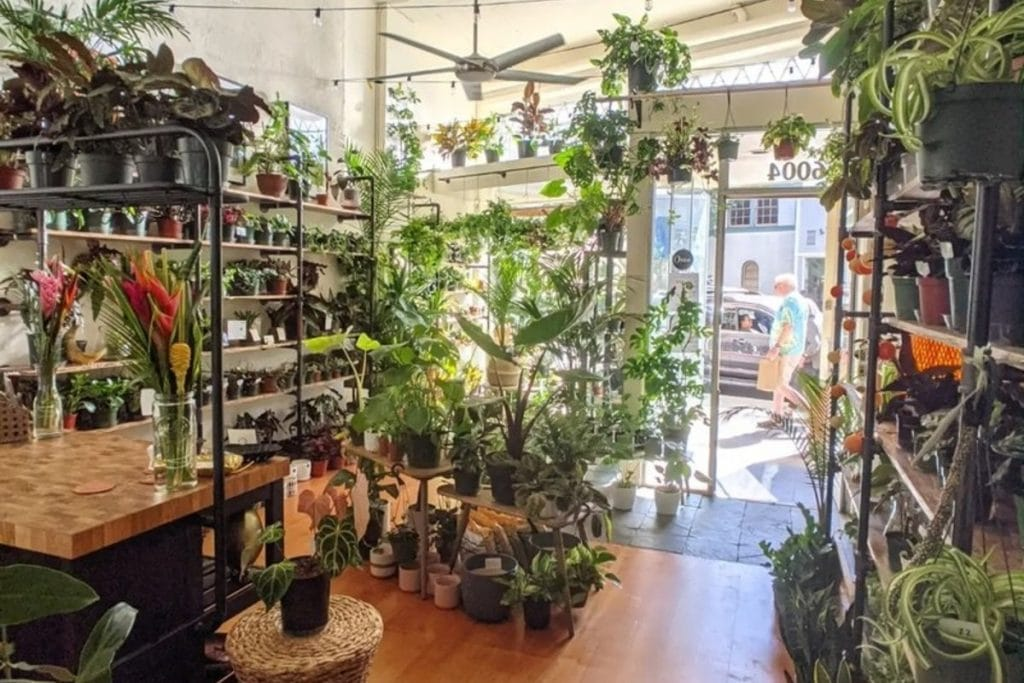 Live Music, Sales, and Activities Are Happening This Saturday In Rockridge