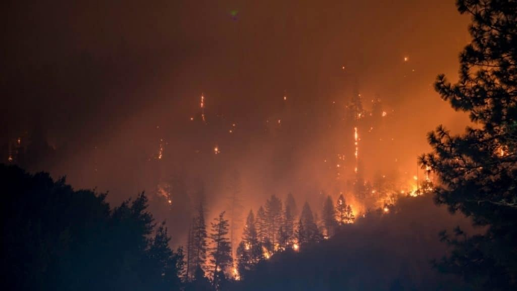 All CA National Forests Are Now Closed Until September 17