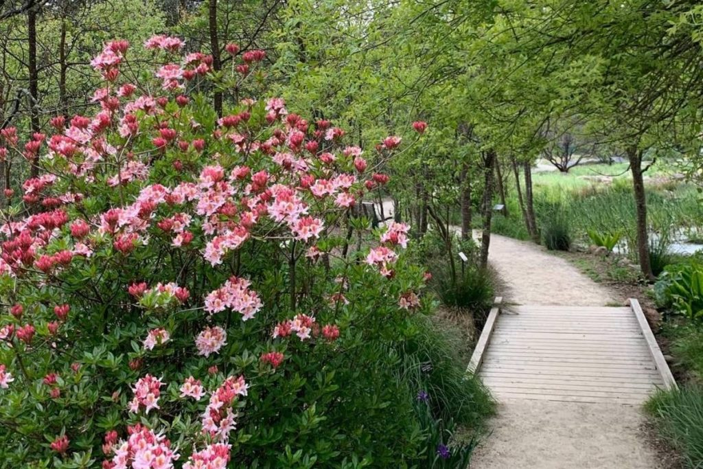 SF Botanical Garden To Hold Native CA Plant Sale September 11 and 12