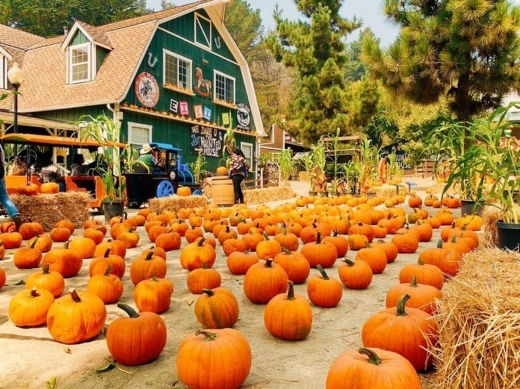10 Outstanding Bay Area Pumpkin Patches To Visit This Fall