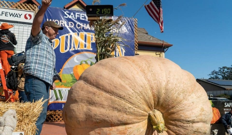 1-Ton Gourd Takes First Place And $19K At Half Moon Bay Pumpkin Festival
