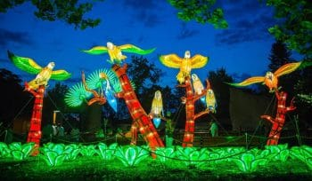 A Dazzling New Lantern Festival Is Heading To Woodland Park Zoo • WildLanterns