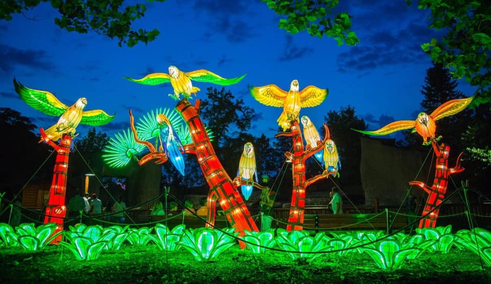 A Dazzling New Lantern Festival Is Heading To Woodland Park Zoo • WildLanterns