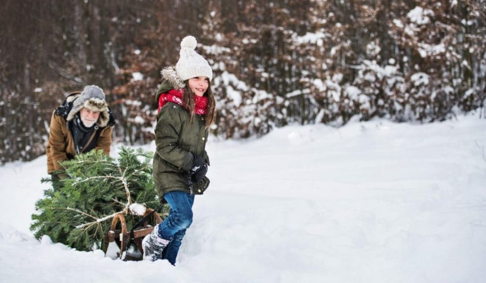 You Can Cut Your Own Holiday Tree At Over 75 US National Forests