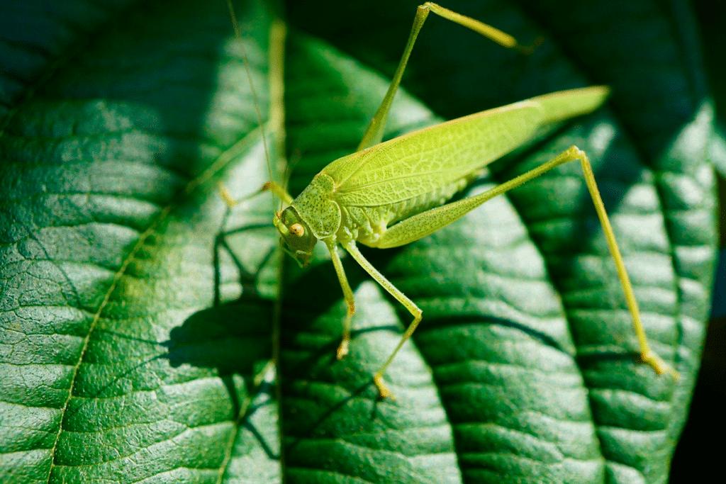 grasshopper standing over leaf