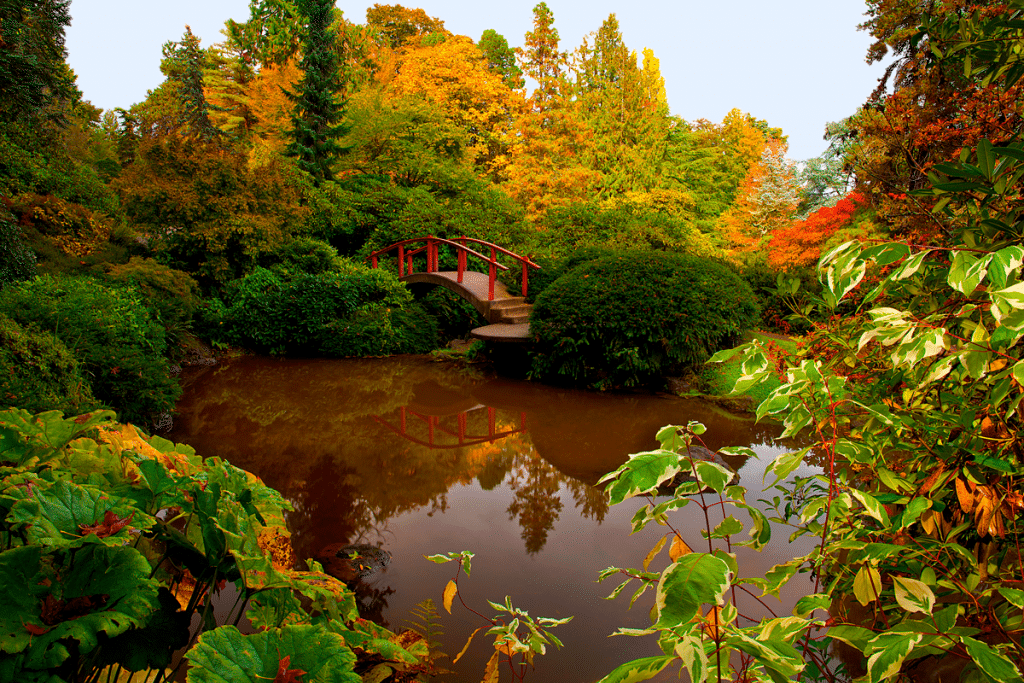 park with pond wooden bridge fall colors