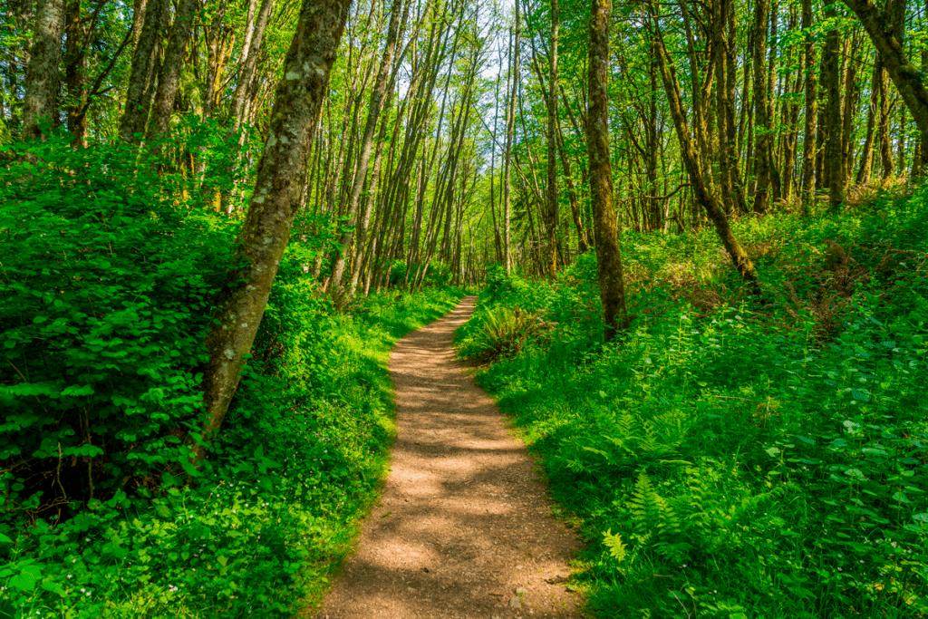 green trees trail cougar mountain