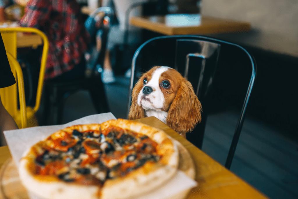 Pup Friendly Restaurants