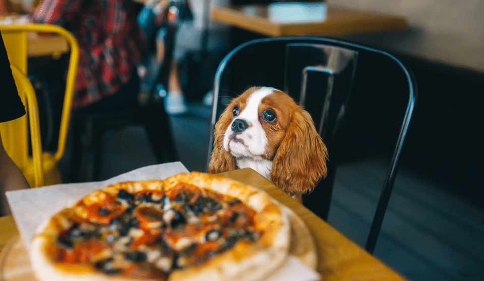 10 Pup-Friendly Restaurants And Bars In Seattle