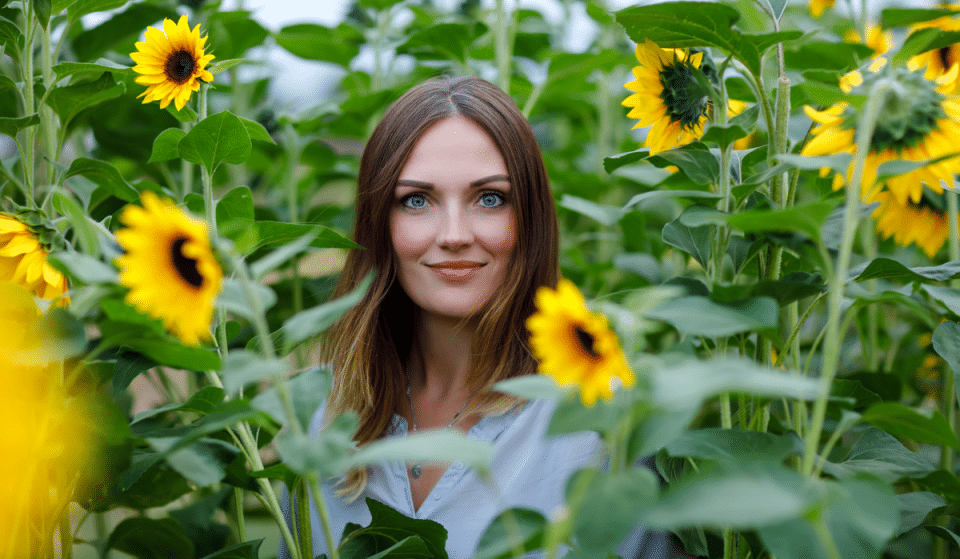 Tickets For This Incredible Sunflower Festival In August Are Now On Sale