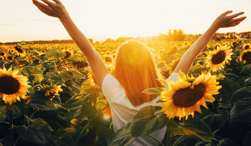 5 Vibrant Sunflower Festivals Around Seattle You Should Visit Right Now