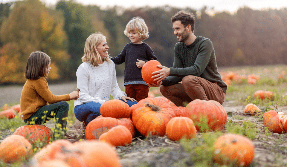 5 Charming Pumpkin Patches Around Seattle You Should Visit This Fall