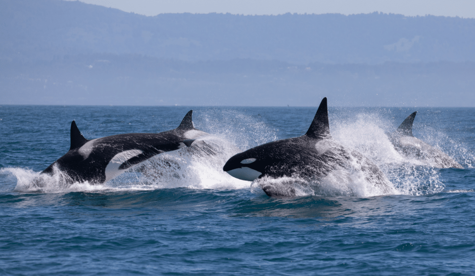 This Whale Watching Experience From Seattle Is The Perfect Weekend Adventure
