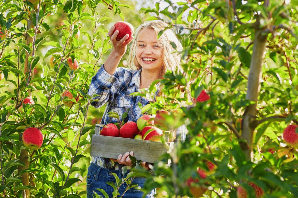 u pick apple orchards