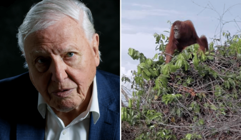 People Are Changing Their Lifestyles After Watching David Attenborough's New Netflix Film