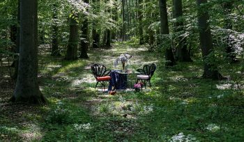 A Restaurant Just Outside Stockholm Is Filling A Forest With Tables To Encourage Social Distancing