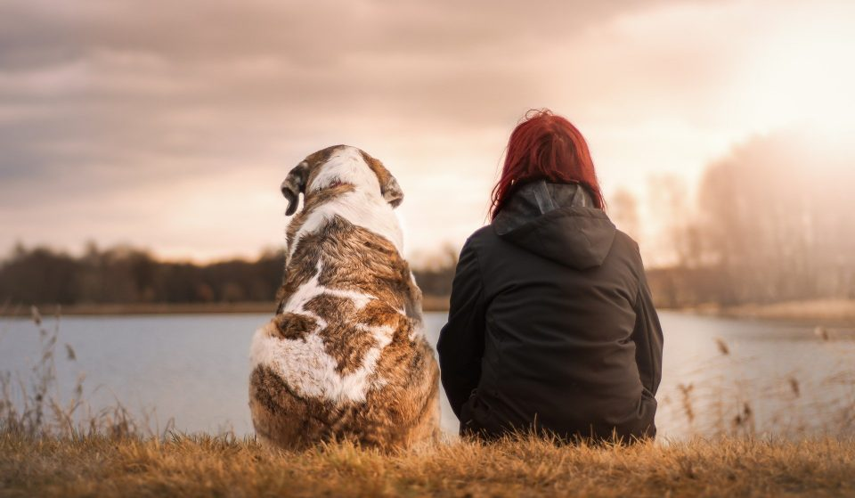 Dog Ownership In Stockholm Has Skyrocketed During The Pandemic