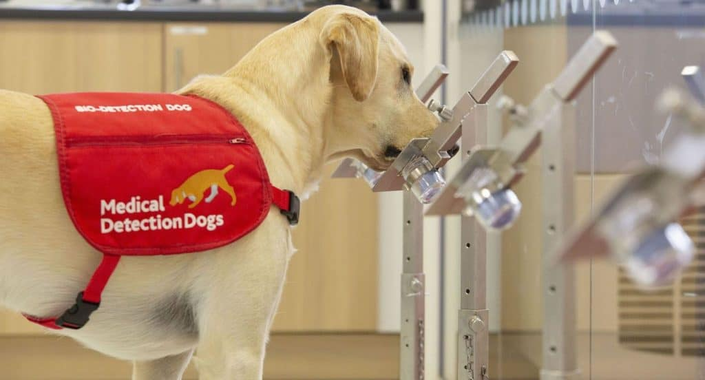 Uppsala Companies Are Training Swedish Dogs To Sniff Out Covid-19