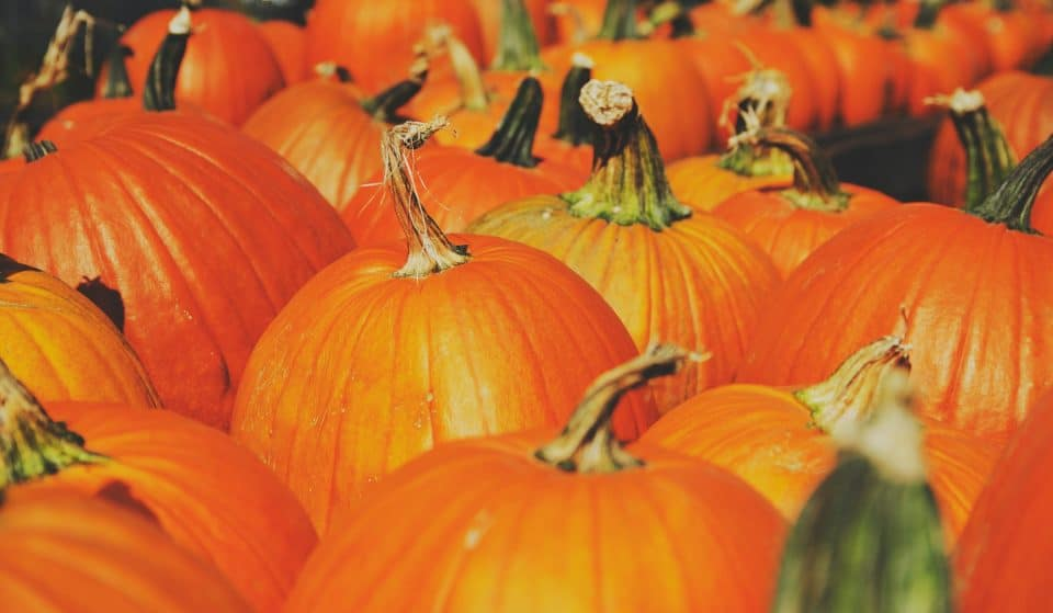 4 Spine Tingling Experiences Perfect For Halloween In Stockholm