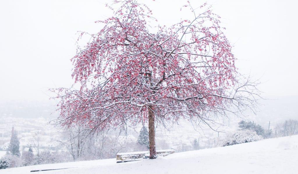 Stuttgart im Schnee: unsere Highlights
