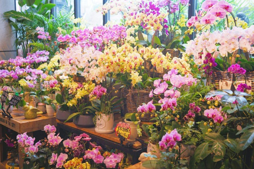 3 ganz besondere Blumenläden in Stuttgart