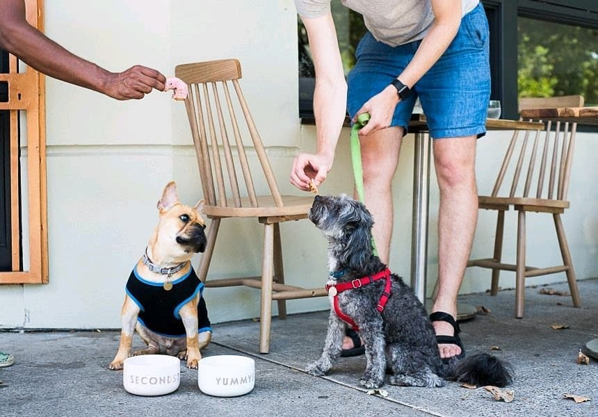 This Dog-Friendly Cafe Is Perfect For Sydney Dog Lovers • Naked Brew Cafe