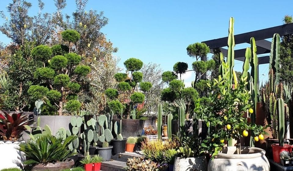 Attention All Green Thumbs: Mega Garden Sale On Now • Garden Life