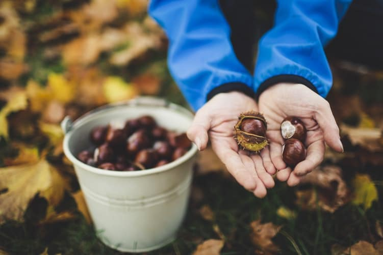 Cosy Up At Home With The Help Of Roasted Chestnuts • Sassafras Nuts