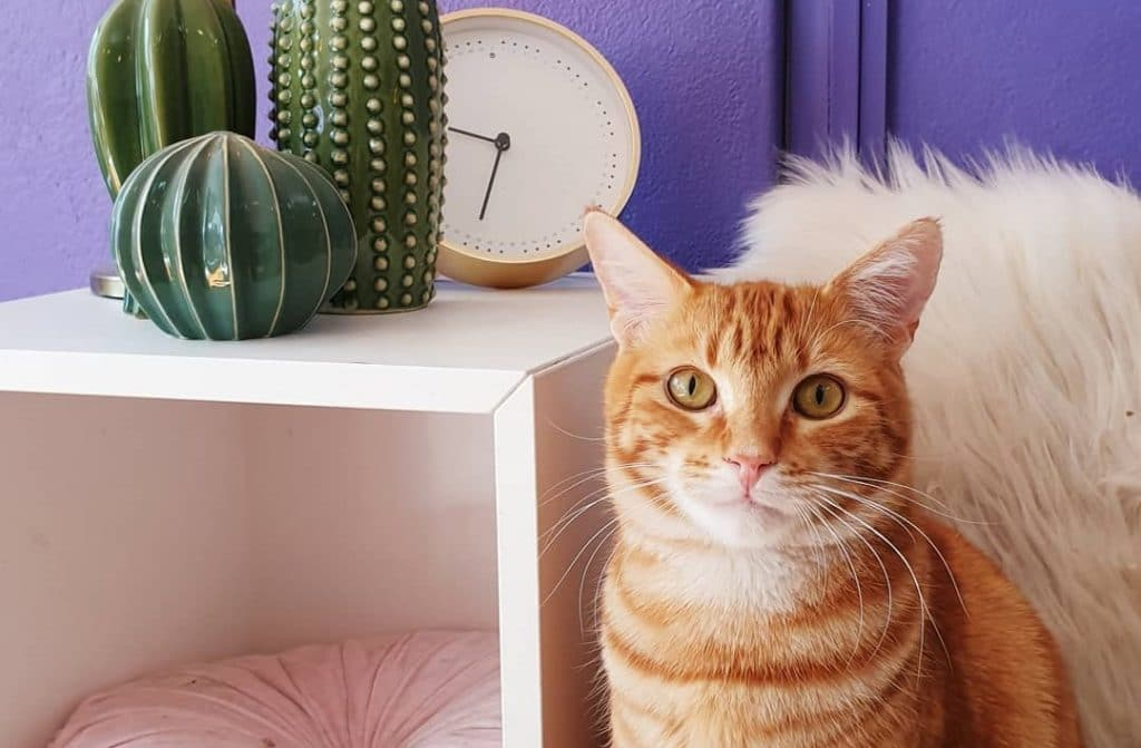 The Cat Paradise In Surry Hills Doing Good Deeds • Catmosphere