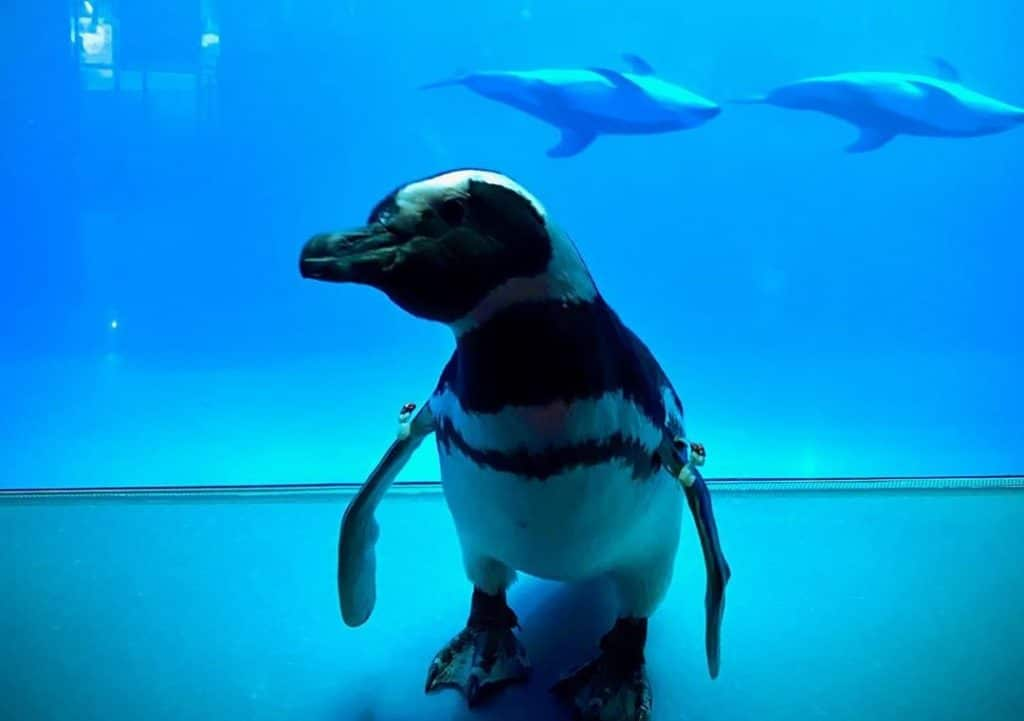Watch As Penguins Roam Freely Around An Aquarium After It Was Closed To The Public