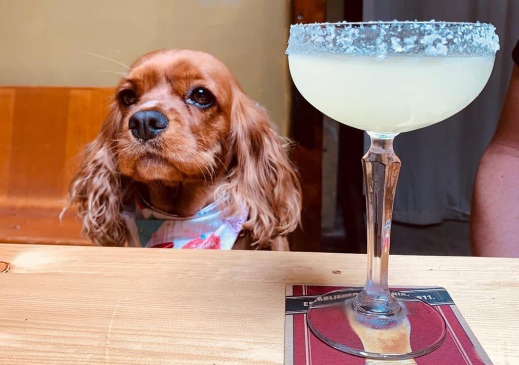 15 Dog-Friendly Bars And Pubs To Visit On Your Next Walk