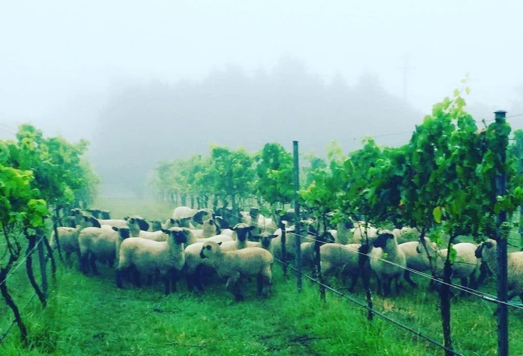 Taste Sustainable Living In The Southern Highlands At This Cellar Door · Tractorless Vineyard