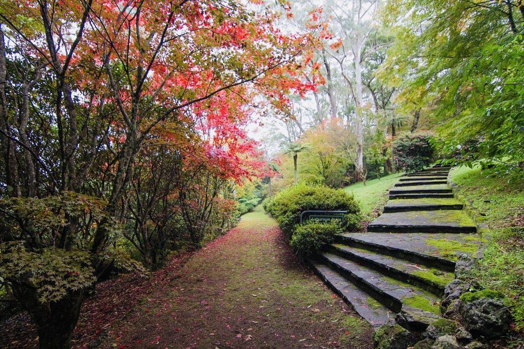 Experience Striking Autumn Hues At This Mount Wilson Garden • Breehold Gardens