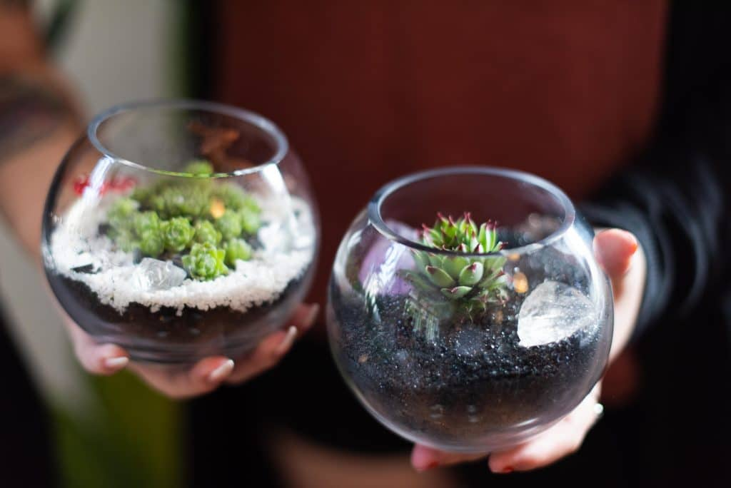 At This Build Your Own Terrarium Bar You Can BYO To Help You Pick And Choose Your Succs