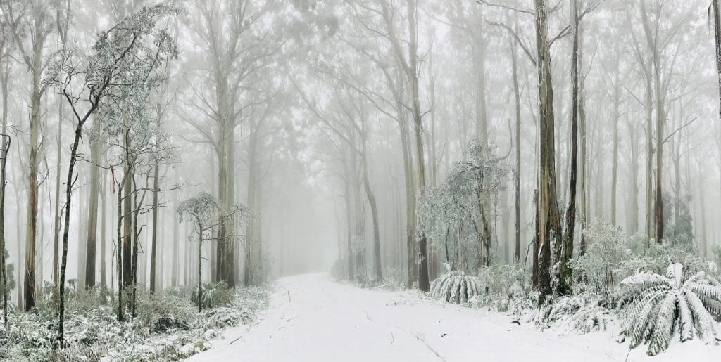 All The Places You Can See Snow Near Sydney