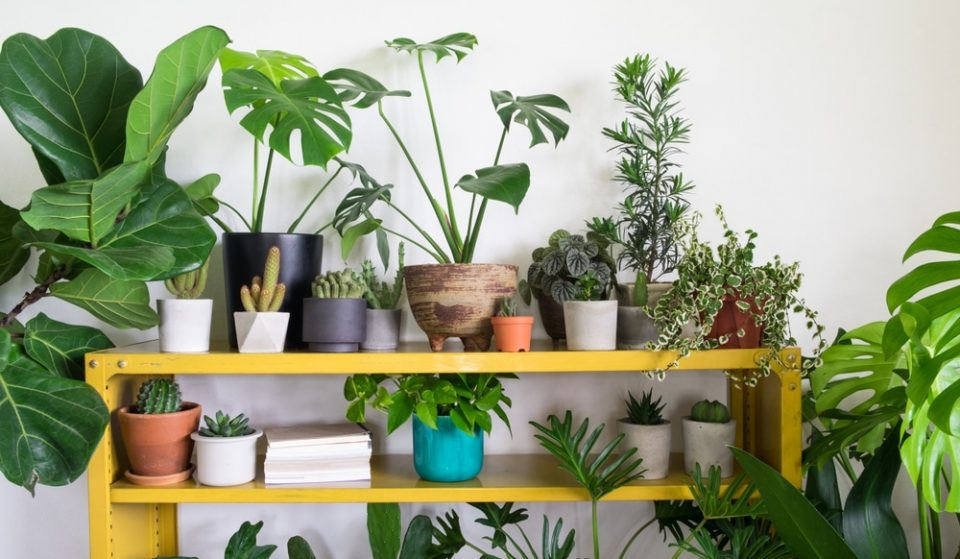 House Plants Can Help Alleviate The Stress Of Lockdown, Study Finds