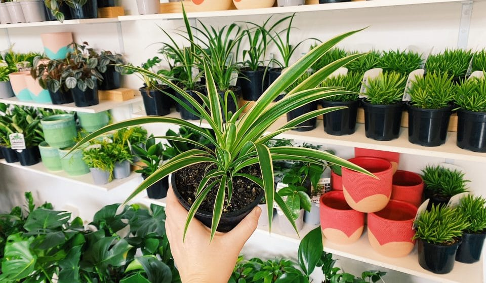 This Vibrant Marrickville Plant Shop Is Offering A Same-Day Delivery Service • PlantGirl