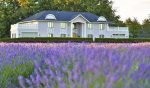 A Lovely New Lavender Farm Will Blossom Into Metro Vancouver This Summer • Lavenderland