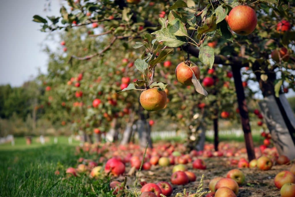 This Beautiful Farm Near Vancouver Is The Best Place To Go Apple Picking This Weekend