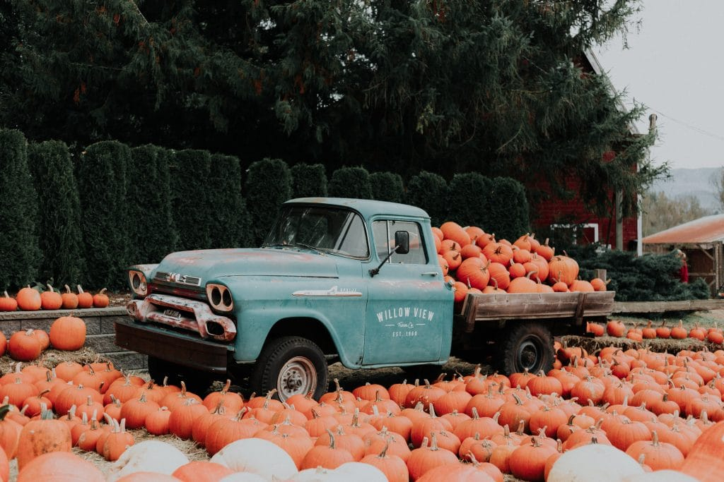 The 5 Best Pumpkin Patches Near Vancouver To Visit Before Halloween